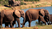 5-Day Garden Route Adventure with Addo Safari Guided Tour from Cape Town, Kapstaden