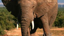 5-Day Small Group Garden Route Tour from Cape Town including Addo National Park, Cape Town, 4WD, ...