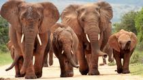 5-Day Small Group Luxury Garden Route Tour from Cape Town with Safari