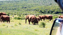 8-Day Garden Route Guided Tour: Cape Point, Cape Winelands and Addo Safari from Cape Town, Cape ...