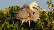 Everglades National Park Expedition, Everglades National Park, Airboat Tours