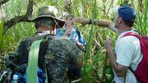 Florida Everglades Swamp Walking Eco-Tour, Everglades National Park, Eco Tours