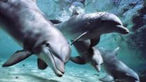Dolphin Experience at the Miami Seaquarium, Miami, Family Friendly Tours & Activities