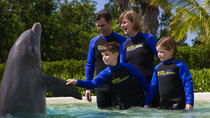 Experiencia con delfines en el Miami Seaquarium, Miami, Family Friendly Tours & Activities