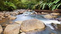 Small-Group Hiking Adventure through Grand Etang National Park in Grenada, Grenada, Hiking & ...