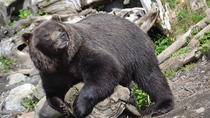 Fortress of the Bear Private Tour in Sitka, Sitka, Private Sightseeing Tours