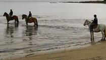 Horseback Riding Experience with Lunch, Montevideo