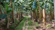 Limon Shore Excursion: City Tour with Banana Plantation and Tortuguero, Limon, Half-day Tours
