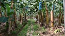 Limon Shore Excursion: Private City Tour with Sloth Sanctuary and Tortuguero, Limon, Ports of Call...