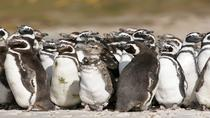 Puerto Madryn Shore Excursion: Private Day Trip to Punta Tombo Penguin Colony, プエルトマドリン