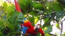 Puntarenas Shore Excursion: Hiking in Carara National Park, Puntarenas, Hiking & Camping