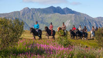 Riding tour Lofoten by horse, from Gravdal, Lofoten, Ports of Call Tours