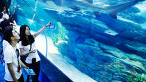 Busan Aquarium Discount Ticket, Busan, Attraction Tickets