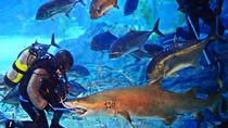 Busan Sea Life Aquarium Entrance Ticket, Busan, Attraction Tickets