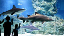 COEX Aquarium Discount Ticket, Seoul, null