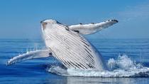 Whale Watching Dunsborough, Margaret River, Cultural Tours