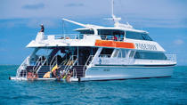 Outer Great Barrier Reef Snorkeling and Diving Cruise from Port Douglas, Port Douglas, Helicopter ...