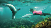 3-Day Eyre Peninsula Wildlife Adventure with Optional Shark Cage Dive from Adelaide, Adelaide, ...