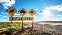 Perth to Adelaide in 9 Days - The Great Australian Wilderness Tour, Perth, Day Trips