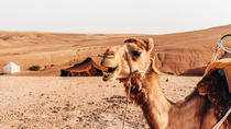 Marrakech Camel Ride in Agafay Desert with Lunch, Marrakech, Nature & Wildlife