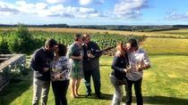 Small Group Tour: Wine-Tasting Tour from Montevideo, Montevideo, Wine Tasting & Winery Tours