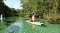 Paddleboard Tour of St Petersburg's Spring River, Tampa