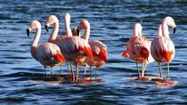 Bull Lagoon and Flamingo-Watching 4x4 Tour from Salta, Salta, Day Trips