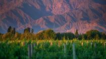 Cafayate Wine Route Day Tour from Salta, Salta, Day Trips