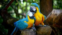 Guira Oga Bird Park Admission with Iguazú Falls Upgrade, Puerto Iguazu, Multi-day Tours