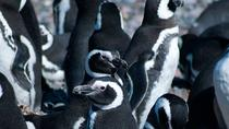 Half-Day Boat Trip to the Penguins Colony from Ushuaia, Ushuaia, Day Trips