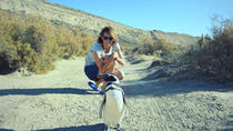 Patagonia Ranch and El Pedral Penguins Colony Full-Day Tour from Puerto Madryn, Puerto Madryn, Day...