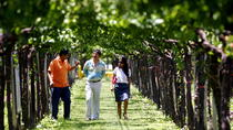 Private Wine Tasting and Vineyards Tour from Mendoza, Mendoza, Wine Tasting & Winery Tours