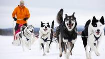 Sled Husky Experience From Ushuaia, Ushuaia, Ski & Snow
