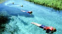 Sucuri River Snorkel Tour from Bonito, Bonito, Snorkeling