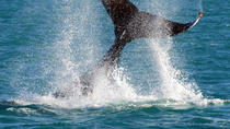 Whale-Watching Cruise and Hillarys Boat Harbour Day Trip from Perth, Perth, Attraction Tickets
