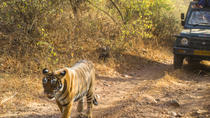 6-Night Golden Triangle Private Tour and Ranthambore Wildlife Safari from Delhi, New Delhi, ...