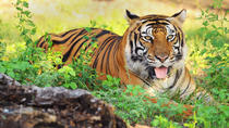 6-Night Golden Triangle Private Tour and Ranthambore Wildlife Safari from Delhi, New Delhi