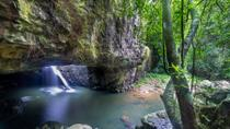 Springbrook and Tamborine Rainforest Tour Including Natural Bridge and Glow Worm Cave, Brisbane
