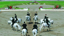 JOIN THE LIPIZZANER HORSE SHOW from Umag Novigrad Rovinj Pula Medulin, Pula, Day Trips