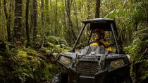 1 Hour Enchanted Forest Track - BUGGIES, Greymouth, 4WD, ATV & Off-Road Tours