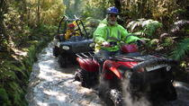 Quad Tour on the Enchanted Forest Track in Greymouth, Greymouth, 4WD, ATV & Off-Road Tours