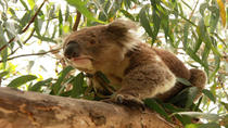 Private Tour: Phillip Island, Penguin Parade and Koala Conservation Centre from Melbourne,...
