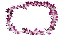 Traditional Lei Greeting on Arrival in Honolulu, Oahu, Airport & Ground Transfers