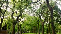 Central Park Sightseeing Running Tour, New York City, Walking Tours