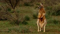 Flinders Ranges and Outback 3-Day Small Group 4WD Eco Safari, Adelaide, Multi-day Tours