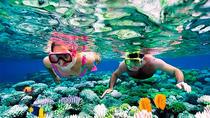 Mesoamerican Barrier Reef Skip-the-Line Small-Group Snorkel, Riviera Maya & the Yucatan,...