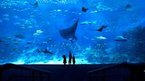 South East Asia (SEA) Aquarium & Maritime Experiential Museum Admission Ticket, Singapore, ...