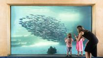 The Aquarium of Western Australia (AQWA): General Admission Ticket, Perth, Attraction Tickets