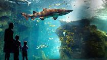 Aquarium La Rochelle Entrance Ticket including Audio Guide, La Rochelle, Attraction Tickets