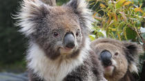 Eintrittskarten zu den Kuranda Koala Gardens und Birdworld, Cairns & the Tropical North, ...